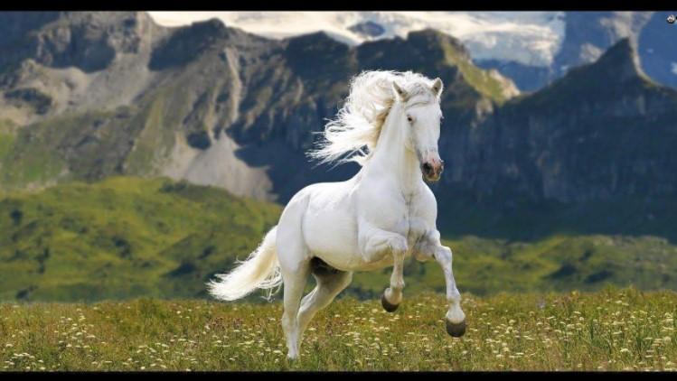 Giấc mơ thấy ngựa có thể diễn ra với nhiều hoàn cảnh, diễn biến, nội dung khác nhau