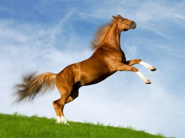 Nằm mơ thấy ngựa đánh số gì là dễ trúng nhất?